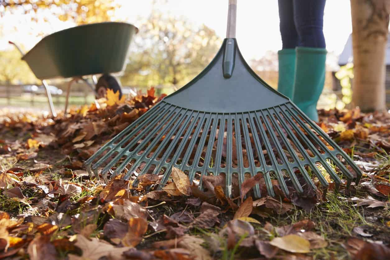 woman raking leaves in the fall